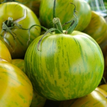 Tomate 'Green Zebra' Seeds