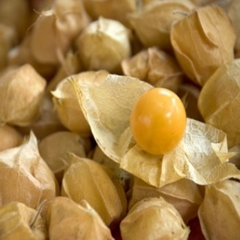 Physalis pruinosa 'Goldie' Seeds