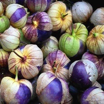 "Physalis ixocarpa ""Purple Tomatillo"" Seeds"