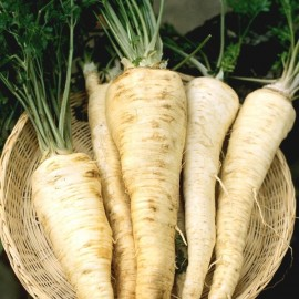 Hamburg Rooted Parsley Heirloom Seeds