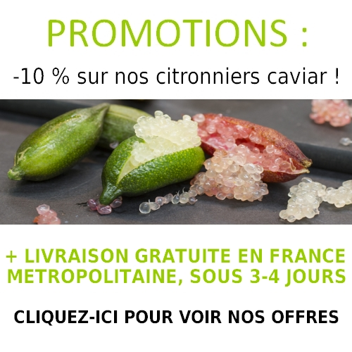 Promotions-citron_caviar
