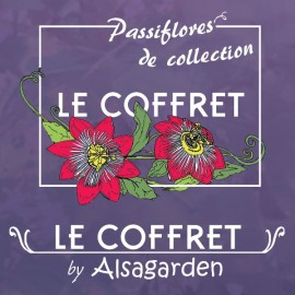 Coffret Collection Passiflore (Assortiment 5 variétés)