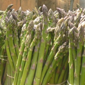Asparagus officinalis 'Argenteuil hative' Seeds