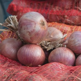 Rosé d'Armorique Onion (French Heritage Varieties) Seeds