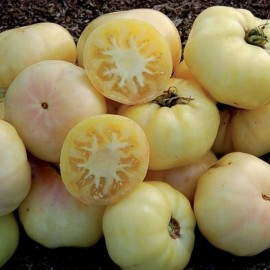 White Beauty Tomato Seeds