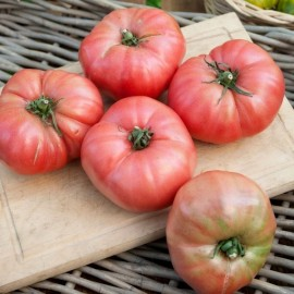 Berner Rose Tomato Seeds