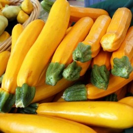 Courgette jaune 'Gold Rush' Graines