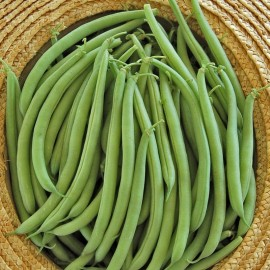 Cupidon French Bean Seeds