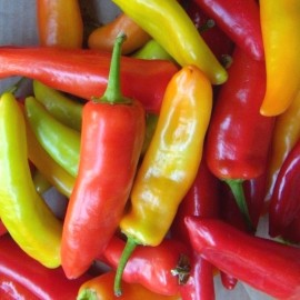 Piment rouge 'Hungarian Hot Wax' Graines