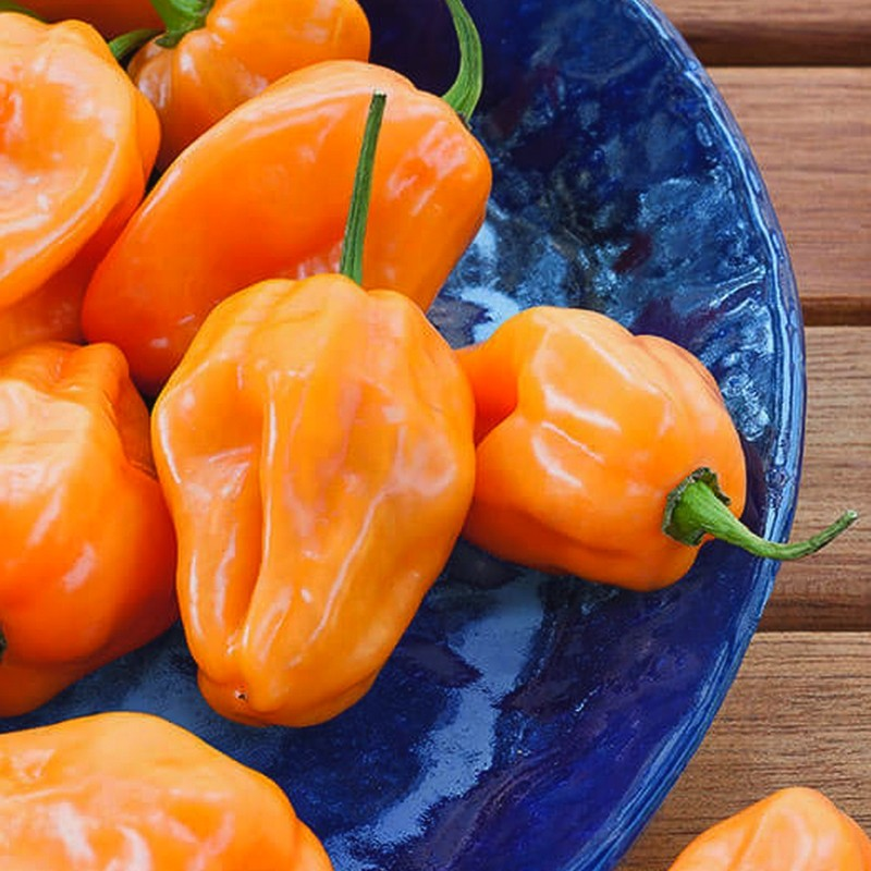 Orange Habanero Hot Pepper Seeds